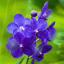 Summer Flower Screensaver